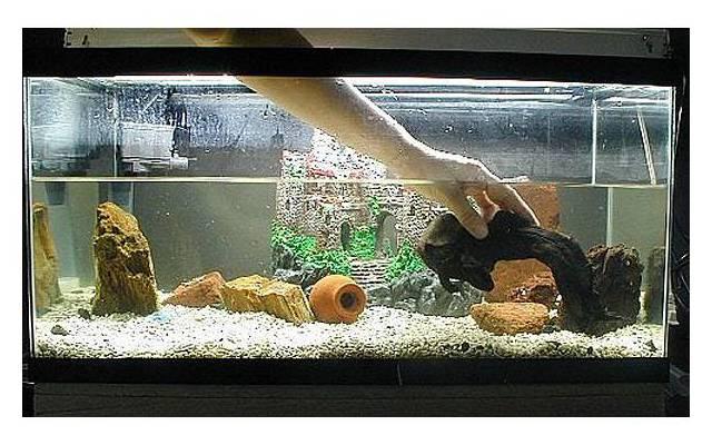 Камни в аквариум своими руками в домашних условиях 80