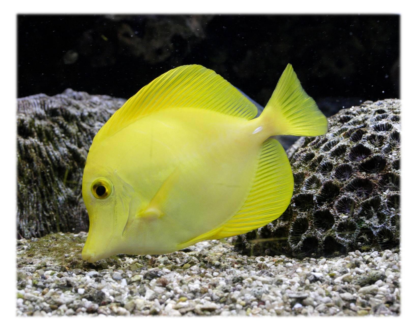 Необычные рыбы хищники для аквариума: зеленый тетрадон, клариус, мешкожаберный сом.