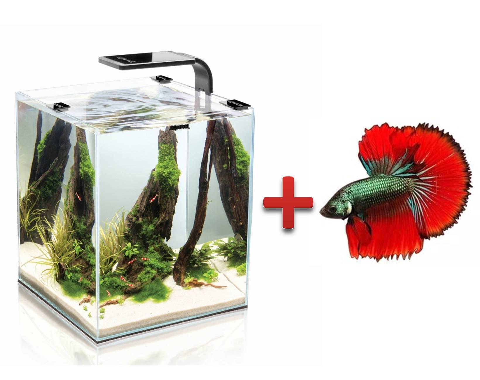 Рыбка в аквариуме в подарок